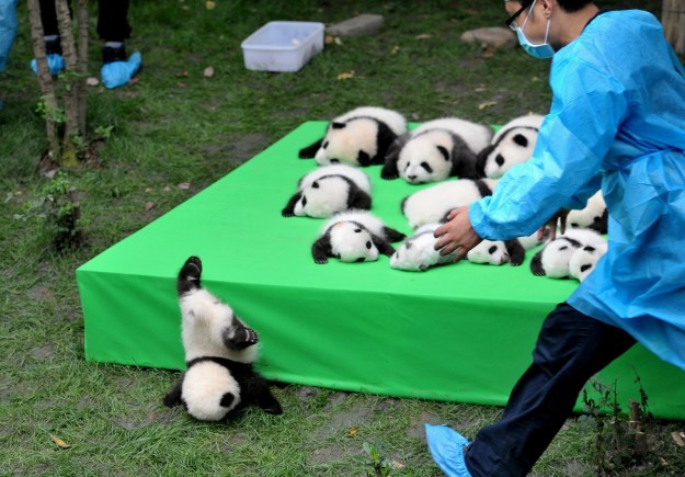 No pandas were harmed in the making of this content.